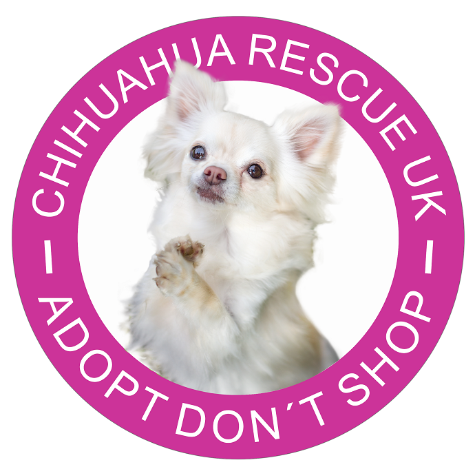 Chihuahua Rescue UK