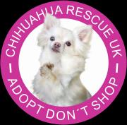 chihuahua-dog-design1