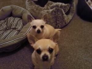 Coco and Ella