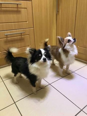 Sammy and Fly